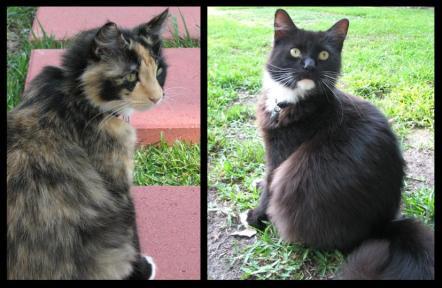 catses.jpg