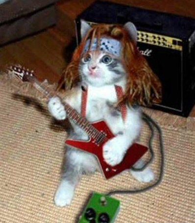 rock_star_cat.jpg