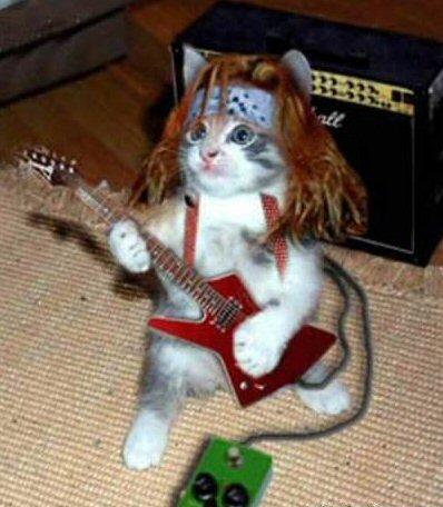 rock_star_cat.jpg